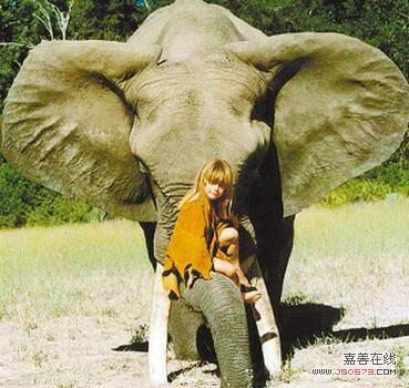 和动物成为好朋友的故事