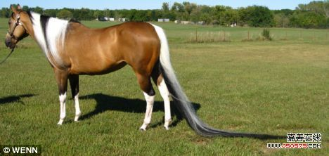 世界上什么动物尾巴最长