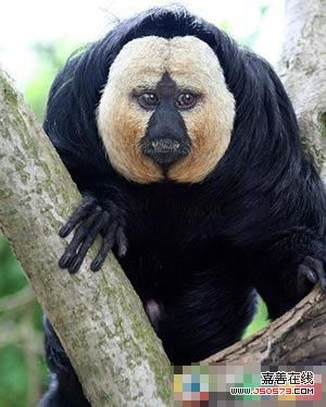 地球上最为奇特的动物
