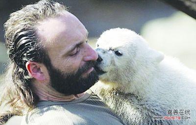 """德国柏林动物园的明星北极熊""""克努特"""""""