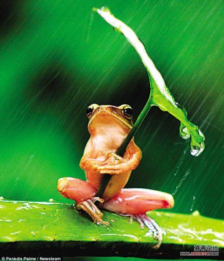 小图青蛙抱着的树叶与大图的树叶并不是同一片树叶.