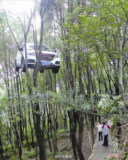 温州动物园北门交叉路口,一辆白色的越野车竟挂在了山坡下的树林里.