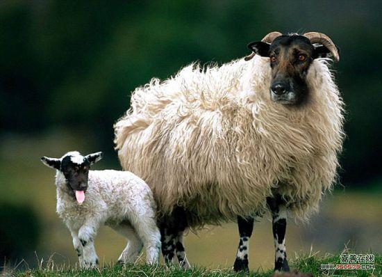 国际在线专稿:据英国《每日邮报》11月3日报道,美国加利福尼亚州25岁艺术家莎拉达雷默(Sarah DeRemer)利用Photoshop软件合成动物照片,创造出噩梦动物园。在她的精心设计下,两种完全不同的物种被合成在一起,成为一种全新物种。   通过将自然界中最凶猛的动物与最温和的动物结合,达雷默已经创造出一整套新的混合生物图片。而合成每张图片,通常耗费达雷默4小时的时间。   达雷默的作品包括由仓鼠与鬣狗结合而成的Hamstyna、由狗与秃鹫结合而成的怪物Fierce Schnowlzer等。