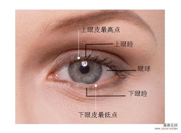 眼睑结构示意图
