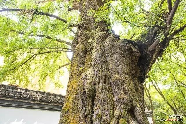 嘉兴下月起在树上刻字也要罚钱 最高可罚3万元