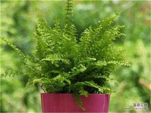 带来好运植物微信头像