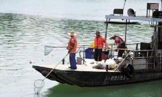 千岛湖的水为何常年清澈?全靠他们默默付出